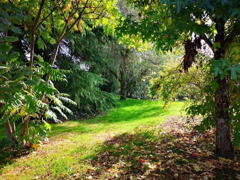 jardin-avant-automne