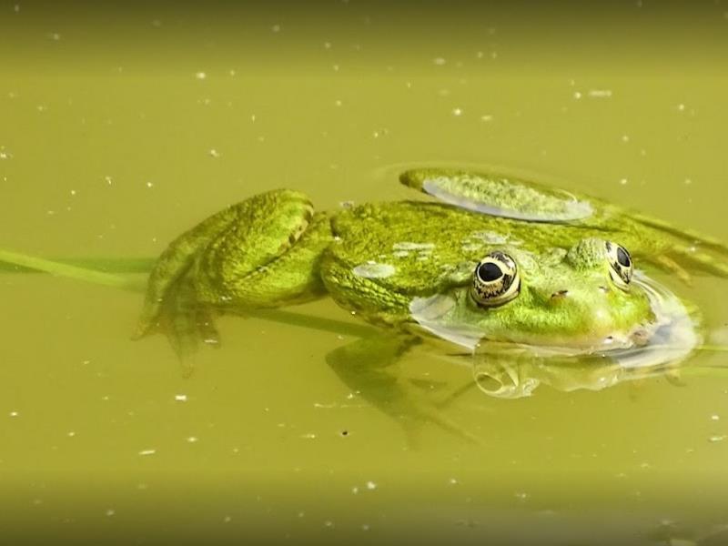 moncoutant-gite-domaine-de-letang-grenouille